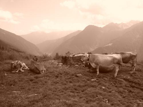 Ieri e oggi in Trentino