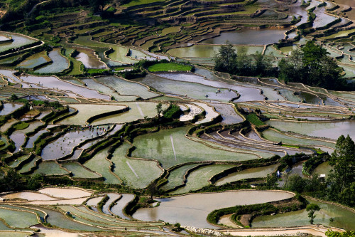 Hani Rice Terraces, Yunnan